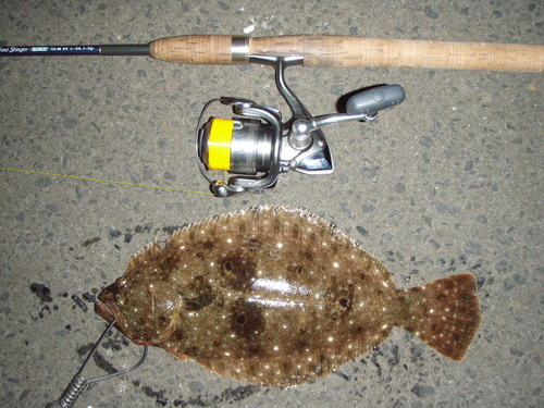 能代漁港のヒラメ
