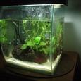 淡水魚水槽