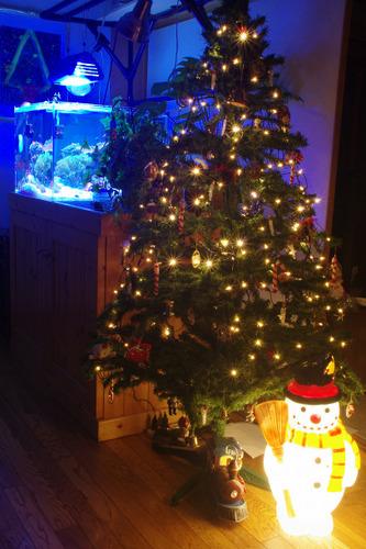 クリスマスツリーと水槽